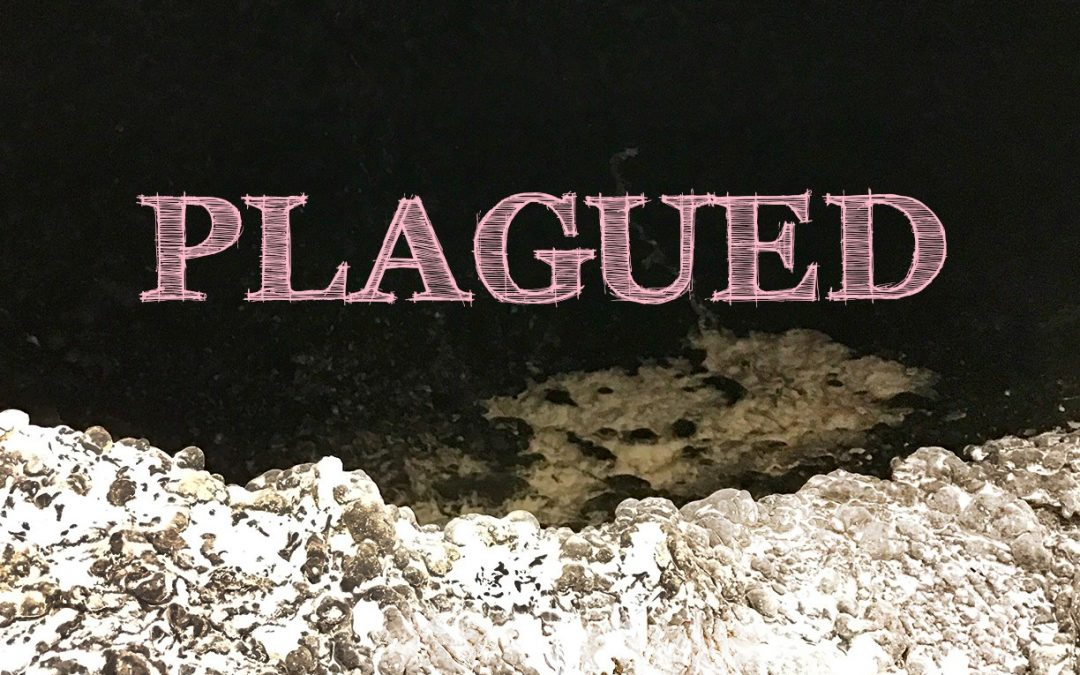 Plagued – MFA Exhibition by Chase Boston