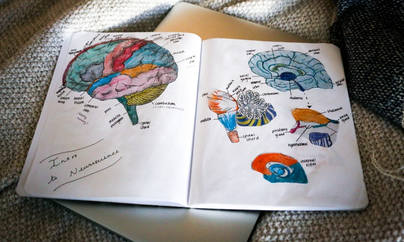 Neurobiology course encourages students to look at science through an artistic, feminist lens by Katie Scheidt