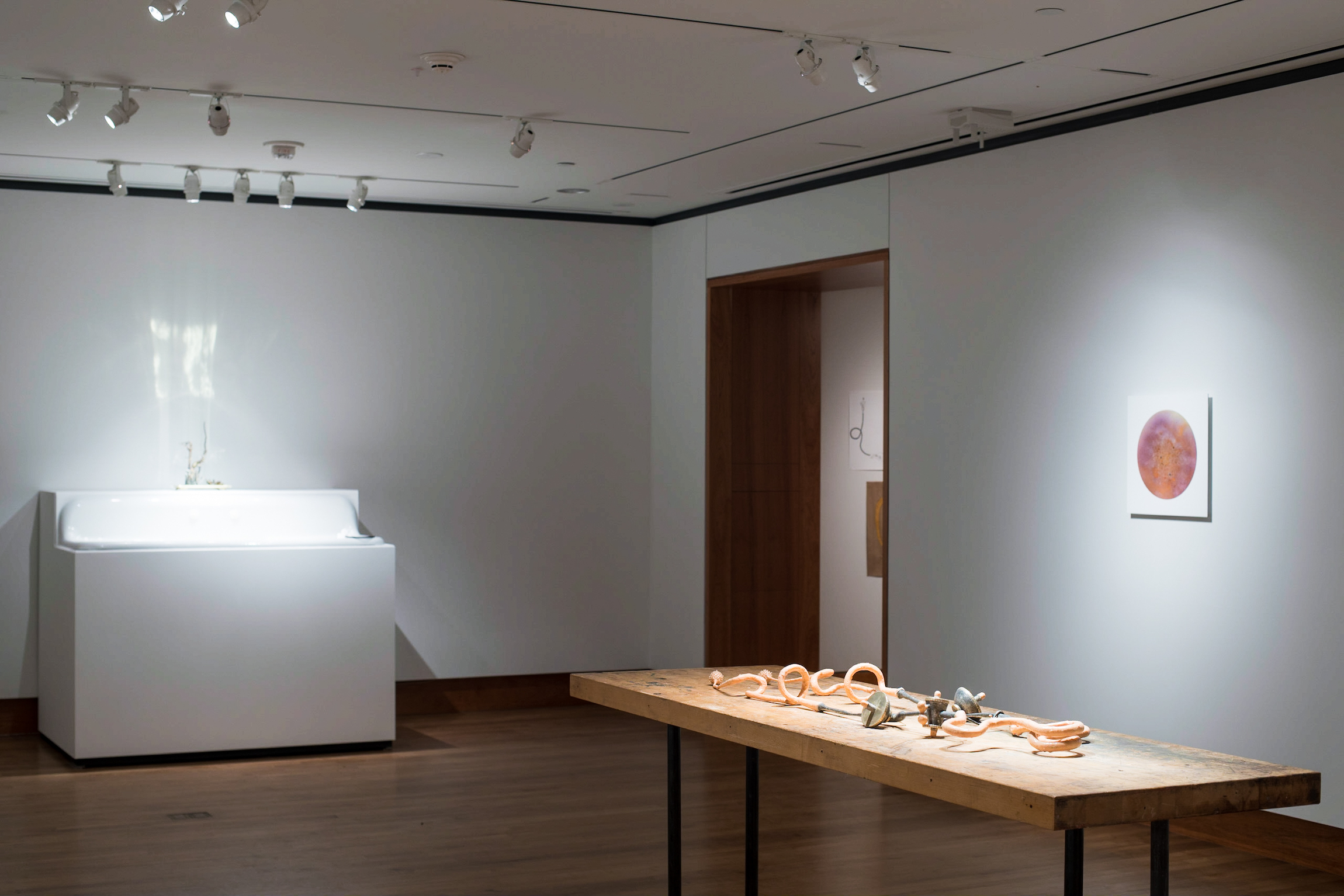 Installation view of Chloe Darke's Master of Fine Arts exhibition Secrete, Augment, Testify at the Chazen Museum of Art, University of Wisconsin-Madison. Photography by Kyle Herrera.
