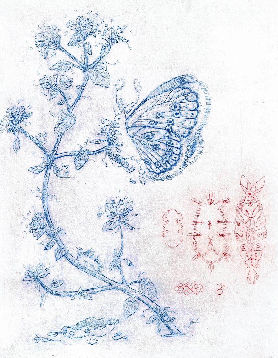 Benjamin the Butterfly, etching by Brooke Leland.