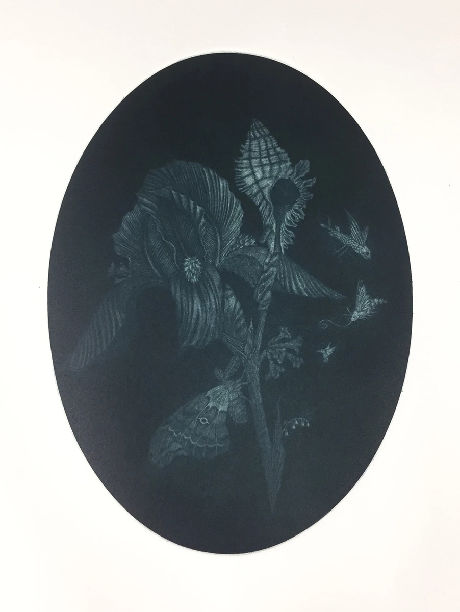 Iris and Moth, aquatint etching by Brooke Leland.