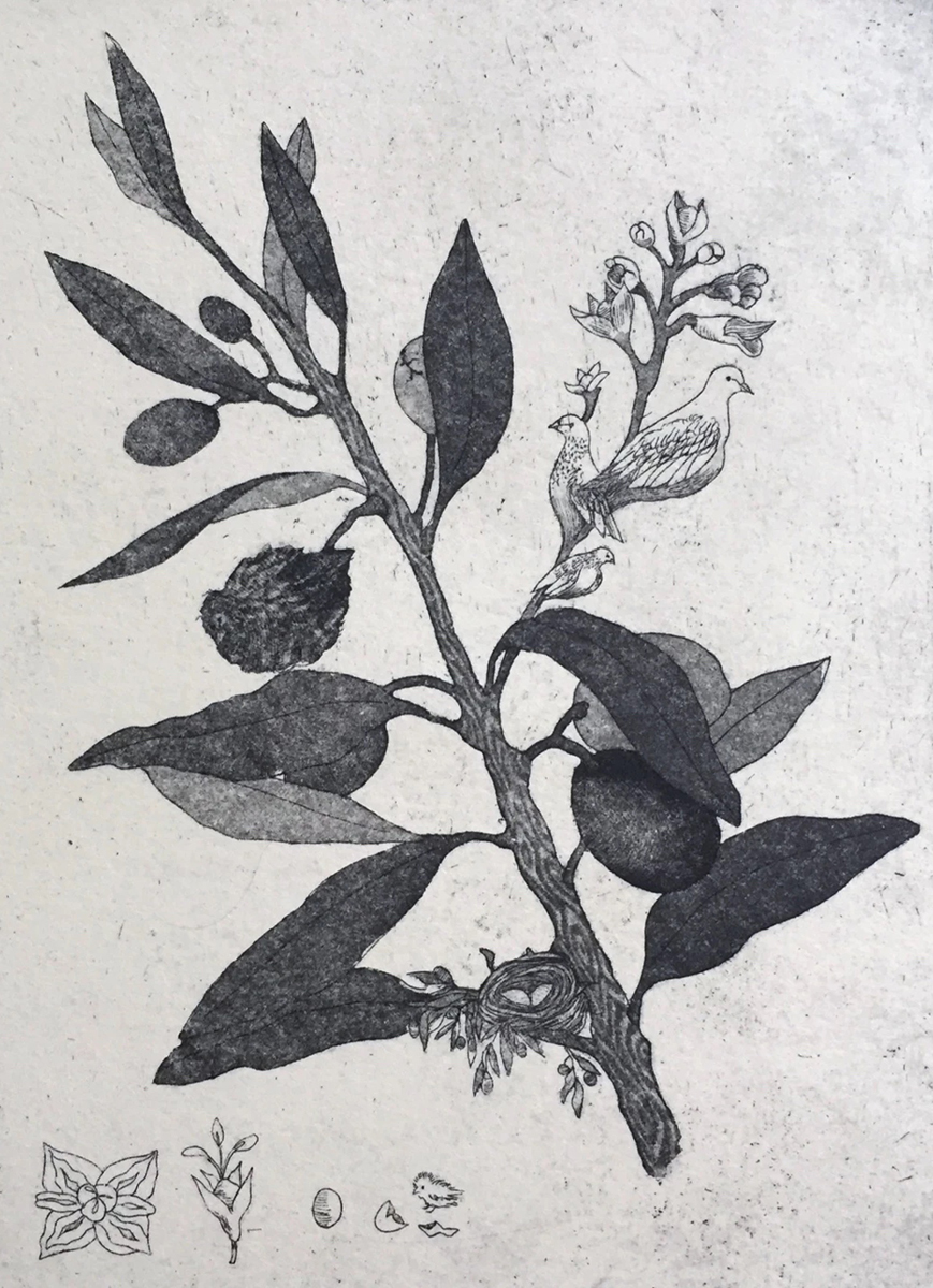 Olive and Dove, etching by Brooke Leland.