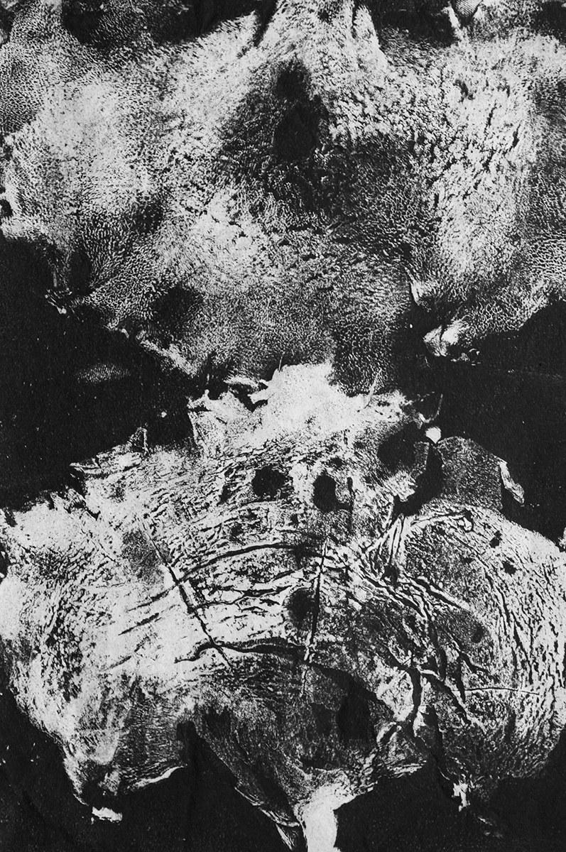 Polyporus squamosus, monotype print by Olivia Wieland.