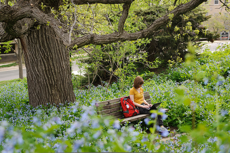 Woman working on her laptop on a bench in a park
