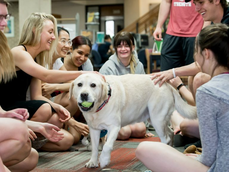 students playing with a dog during finals week